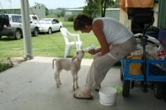 milk-lamb